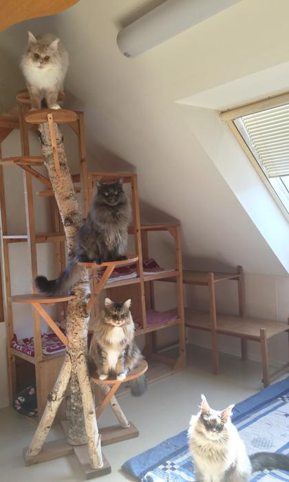 Chatileの猫たち